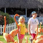 Jacob and Rhiannon in a flamingo show in Nassau, Bahamas. One of the flamingos really liked Rhia