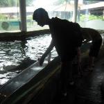Bilde fra Underwater World and Dolphin Lagoon