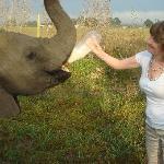 Bottle feeding the baby elephants in the morning