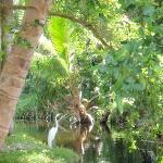 pond area on resort