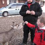 Feeding the deer.