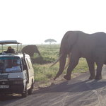 Herds of elephant at Amboseli National Park