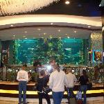 Chart House 70,000 gallon fish tank