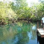 Cenote Aguila