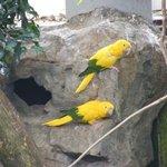 Bilde fra National Aviary