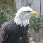 And a bald eagle