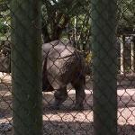 A rino's rear enty point.