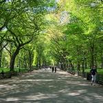 A nice morning walk through central park