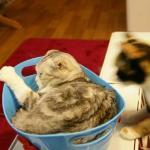 En av katterna som sov i en plåtbalja. Andra busade eller grälade med varandra.
