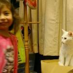 Lara fick besöka ett katt-café. Egentligen en illa-luktande pytteliten lägenhet med massor av ka