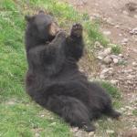 Bilde fra Parque de las Leyendas (Zoo)