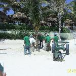 Hard working local planting Palm trees on the beach