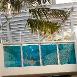 Rumba's glass front heated pool