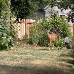 a deer in the garden!