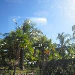 大小のココナツの木々