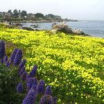 Pacific Grove walk path