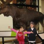 """The moose is this big!"" Museum in Saint John."