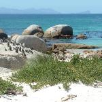 African Penguins, on Boulder Island, just south of Cape Town. Just beautiful!