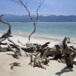 Bilde fra Gili Islands