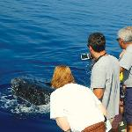 See the whales with the experts at Pacific Whale Foundation.