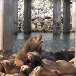 Sea Lions in the spring! Lots of new babies to see frolic as you watch from the Captain's boat t