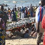 Tanji beach - landng & sorting fish