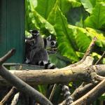 Photo de Tsimbazaza Zoo
