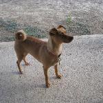 owner's dog