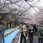 Bilde fra Ueno Park