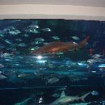 The aquarium has a water slide that runs throught it!