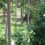 Walking out of our villas - seeing the elephant trekking