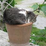 the cats of Il Molinello