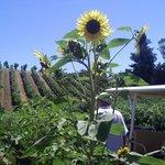 Sonoma, CA, United States Berlinger Winery