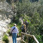 Hiking through olive tree groves.