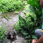 Feeding the turtle at Proyecto Asis