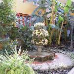 garden behind lobby