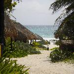 view thru the resort at coco,,garden bungalows are just as great!
