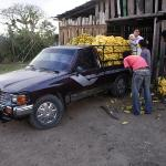 A truck of Guatemalan bananas being imported into Honduras.