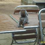 our little friend