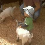 Feeding goats in Beacon Hill Park
