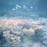 splendido reef