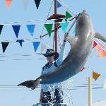 Pet Porpoise Pool - Coffs Harbour NSW
