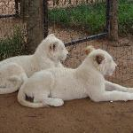 some cute albinos