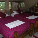 Comfortable beds in spacious tent.