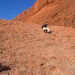 Bilde fra Ayers Rock and the Olgas