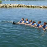 Dolphin Cove in the Grand Caymen Islands