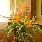 Heliconia Valley products Illuketia