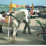 City Beach Hotel - Beautifully Groomed Horse for Rent at the Opening to Beach!