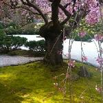 The beautiful Portland Japanese Garden.
