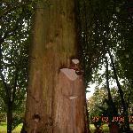 Mira que árbol